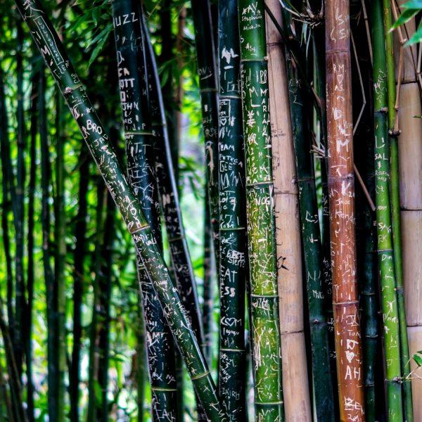 Wooden Shade Handgemachte Brillen Bambus Holz Holzbrillen Bambusbrillen Holzsonnenbrillen Optik Weißmann Nachhaltigkeit Umweltschutz Tragekomfort Rohstoff Gläser Polarisation